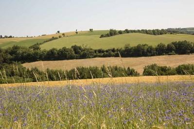 Paysage verdoyant - Teillet juin 2015 © D. Delpoux