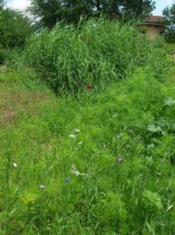 Système d'assainissement écologique chez un particulier © épurscop