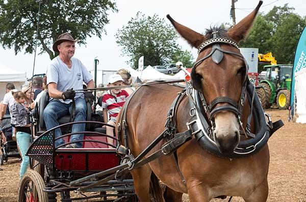 Concours de chevaux de trait à Villefranche d'Albigeois