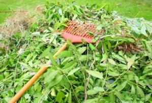 Comment gérez-vous vos déchets verts ? Répondez à la mini-enquête de Trifyl