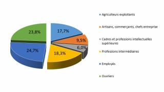 Pourcentage d'entreprise par secteur d'activité en 2011. Données INSEE.
