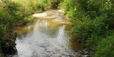 Milieu humide à Paulinet